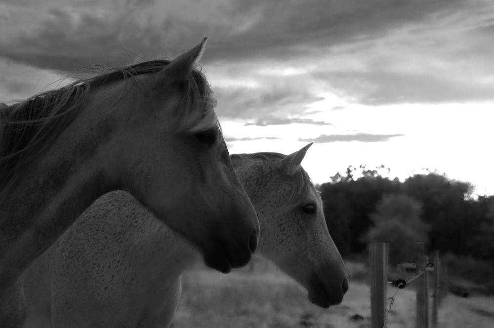 Une troublante expérience avec les chevaux