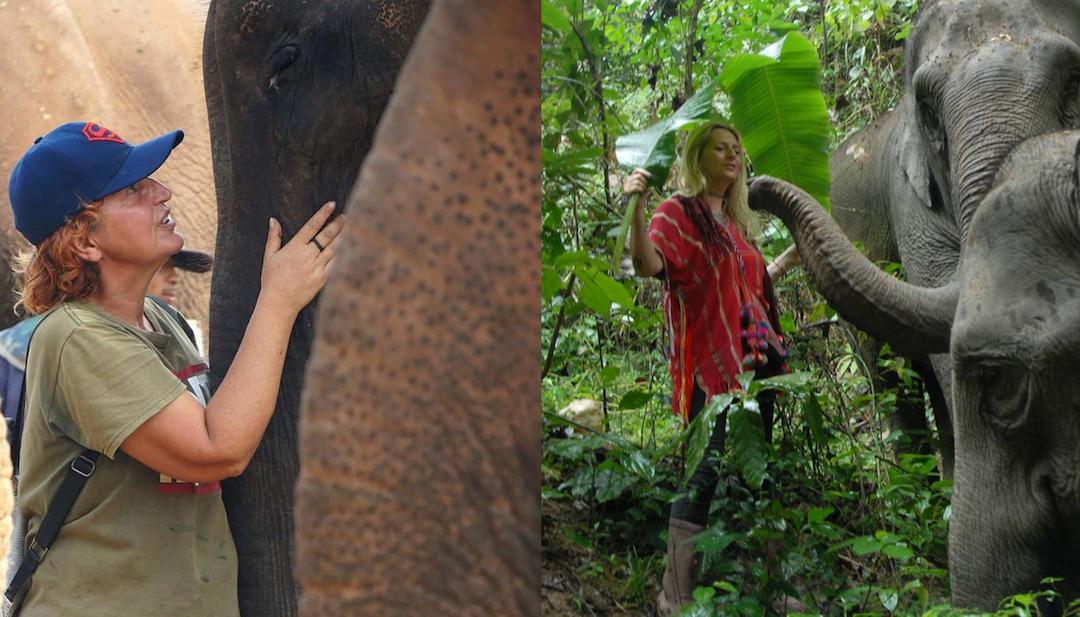 Après «La femme est l'avenir de l'homme», peut-on dire qu'elle est aussi celui des éléphants ?